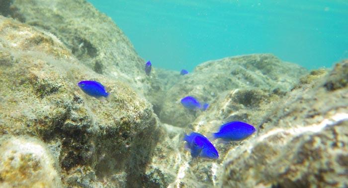 沖縄行くなら水中カメラを絶対持ってた方が良い理由!水納島で撮影したお魚さん!