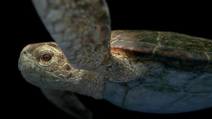 zbrushとmentar layで作られたリアルなウミガメの作品!