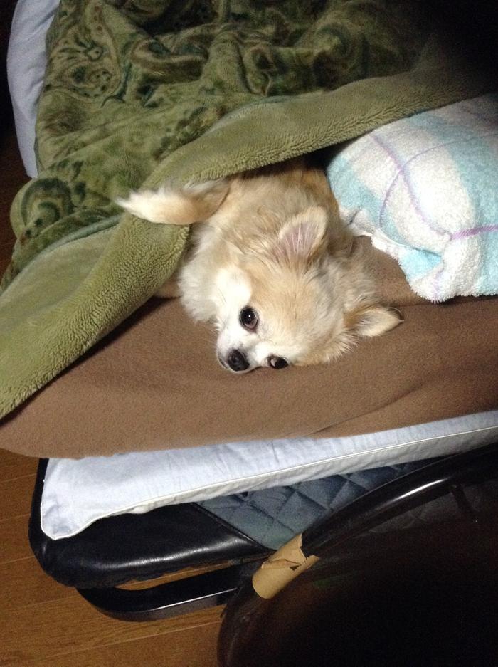 140515_dog_sleep_01