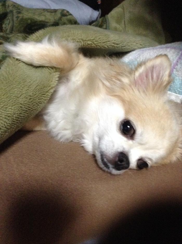 140515_dog_sleep_02