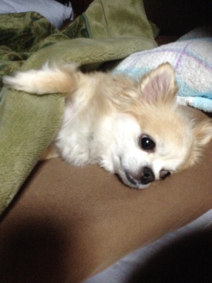 140515_dog_sleep_03