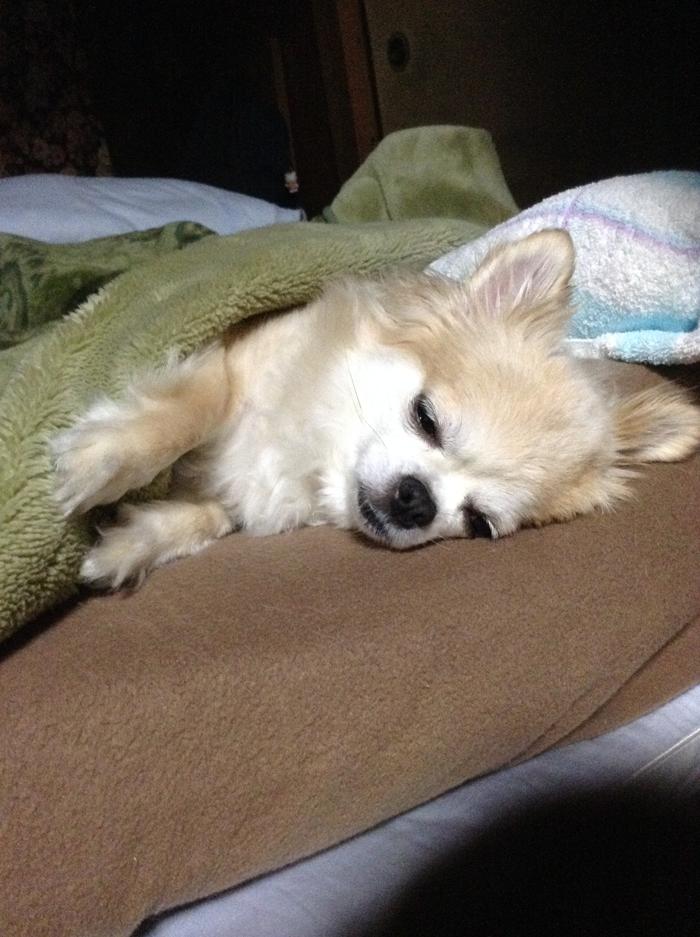 140515_dog_sleep_04