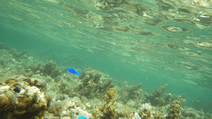 2回目の沖縄旅行  水中撮影でニモ発見!