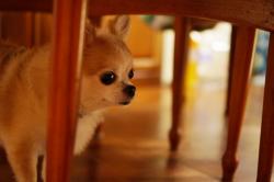 140828_dog_01