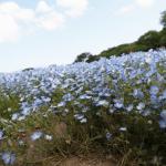 たった3時間いるだけでGWを満喫した気分になれるお花畑を見た事ありますか?