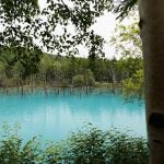 """2015年7月 富良野旅行 青い池は""""あお""""かった!"""