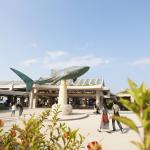 沖縄旅行2015年!2度めの美ら海水族館へ行ってきました!やっぱりジンベエザメの迫力は凄い!