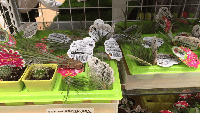 160511_airplants_03