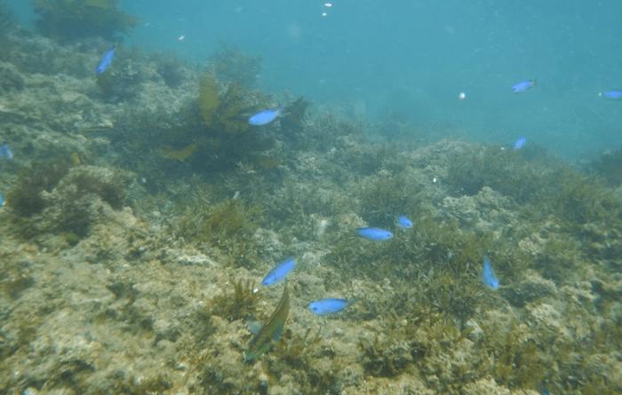 千葉の海へいくなら青いお魚沢山のシュノーケルが楽しいプライベートビーチを教えます。