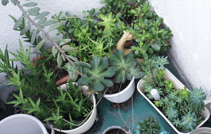 一人暮らしで簡単に育てやすい植物とは?