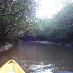 男3人で石垣島旅行3日目。吹通川でのマングローブカヌー体験が冒険心に火を付ける。