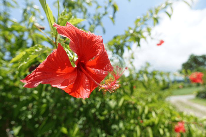 サラリーマン横目に今年2度目の沖縄旅行。