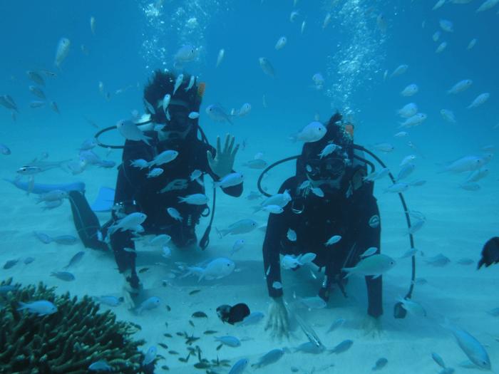 魚の数が多い!沖縄の離島 渡嘉敷島へ行くなら絶対ダイビングをすべき!