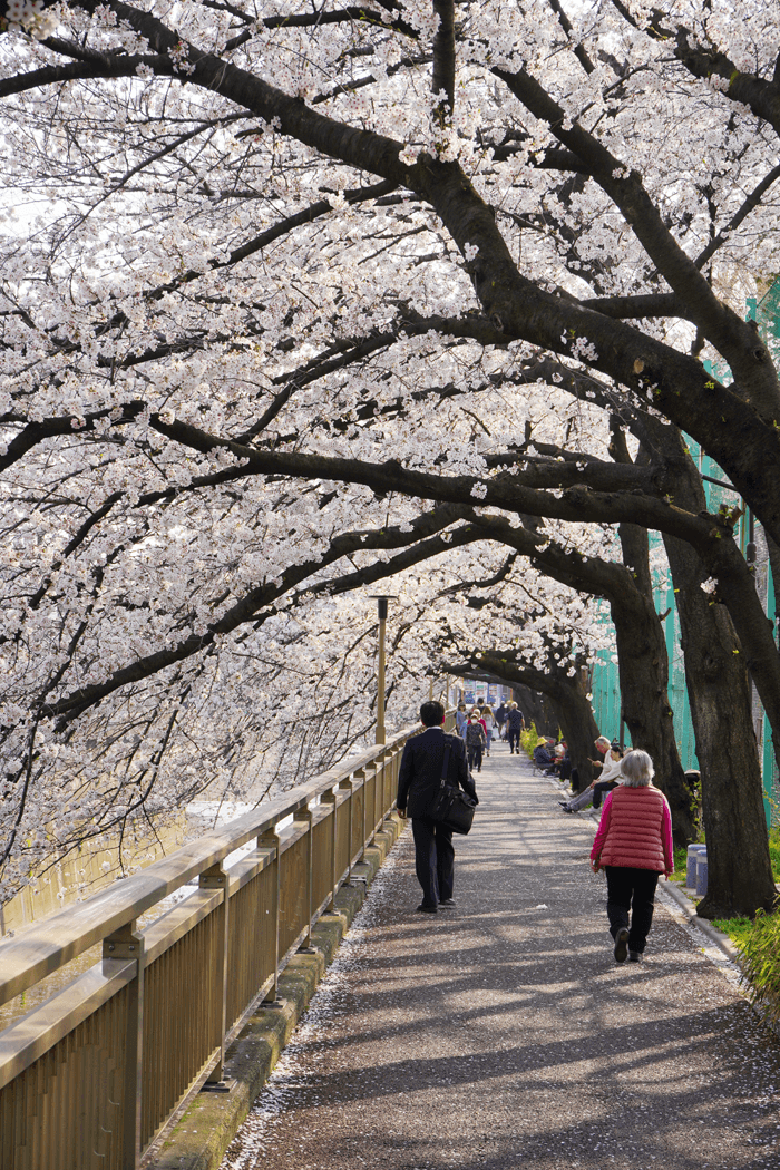 α7Ⅲで近所の桜撮影してきました。