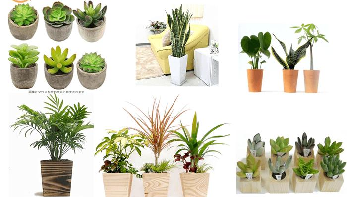 デスク周りに置けそうな可愛い植物をアマゾンで探してみました。