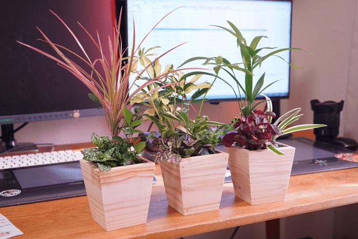 アマゾンで観葉植物を買いました。