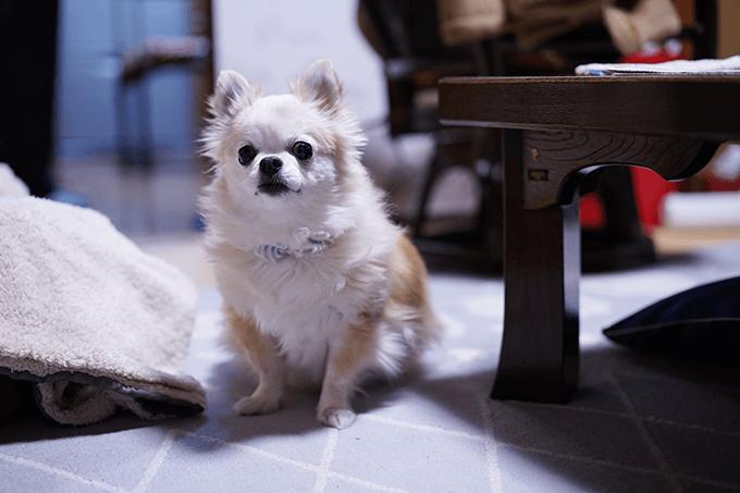 SEL55F18Zで犬を試し撮り