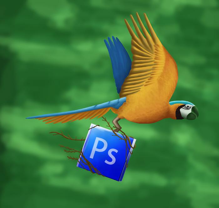 title_illustoration_bird.jpg